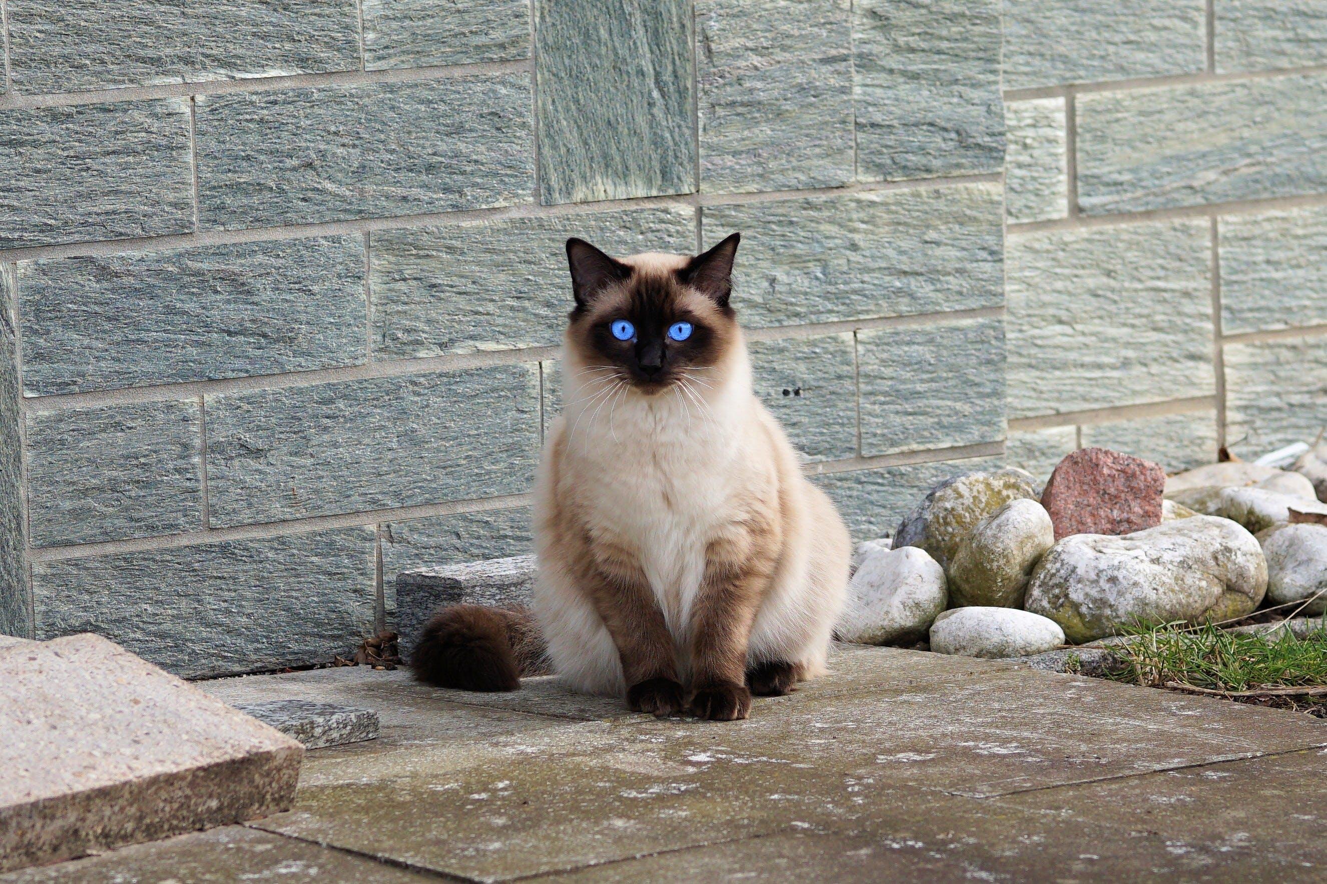 Free stock photo of fur, kitten, cat, cat portrait