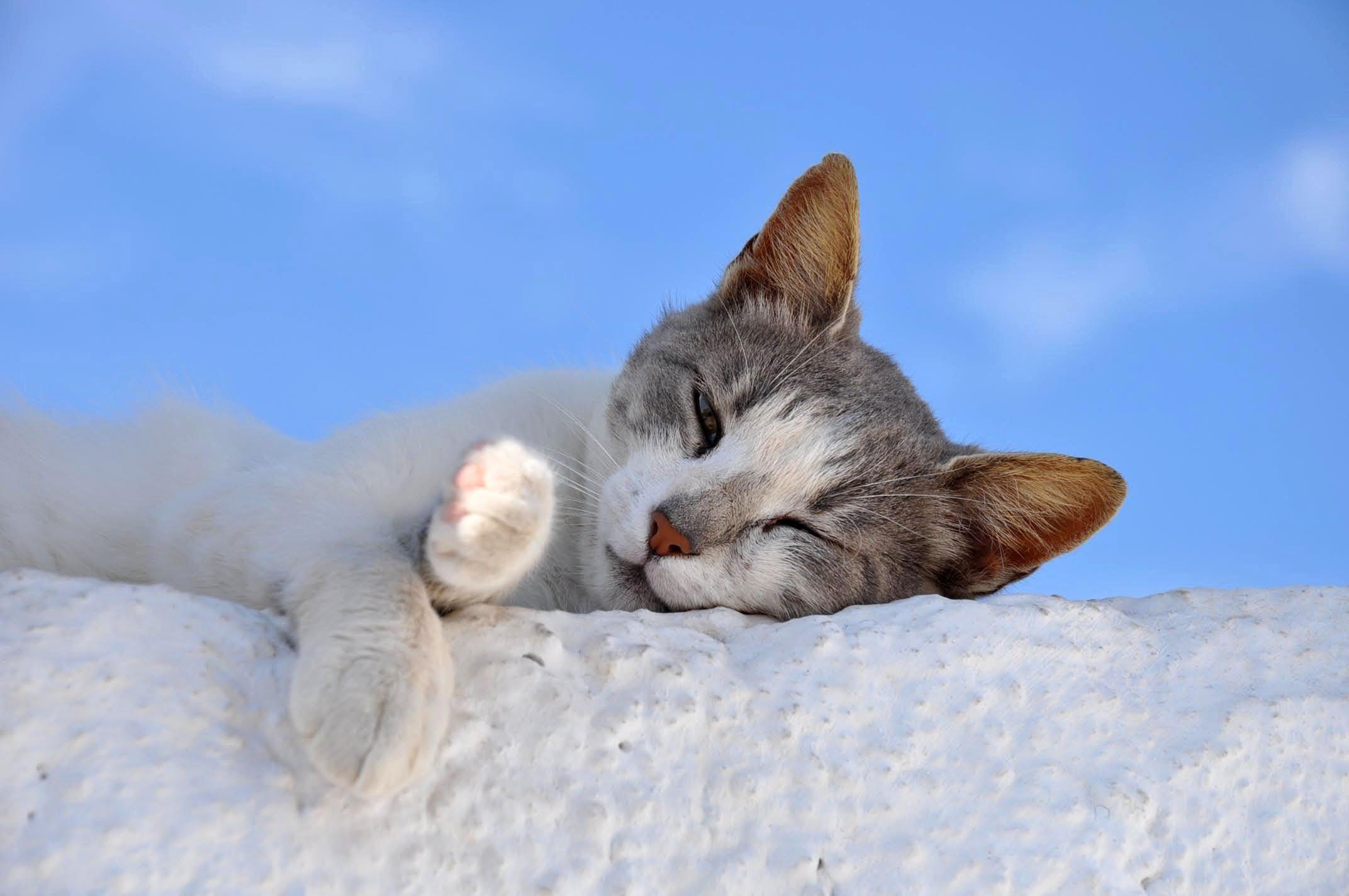 Free stock photo of animal, cat, sleep