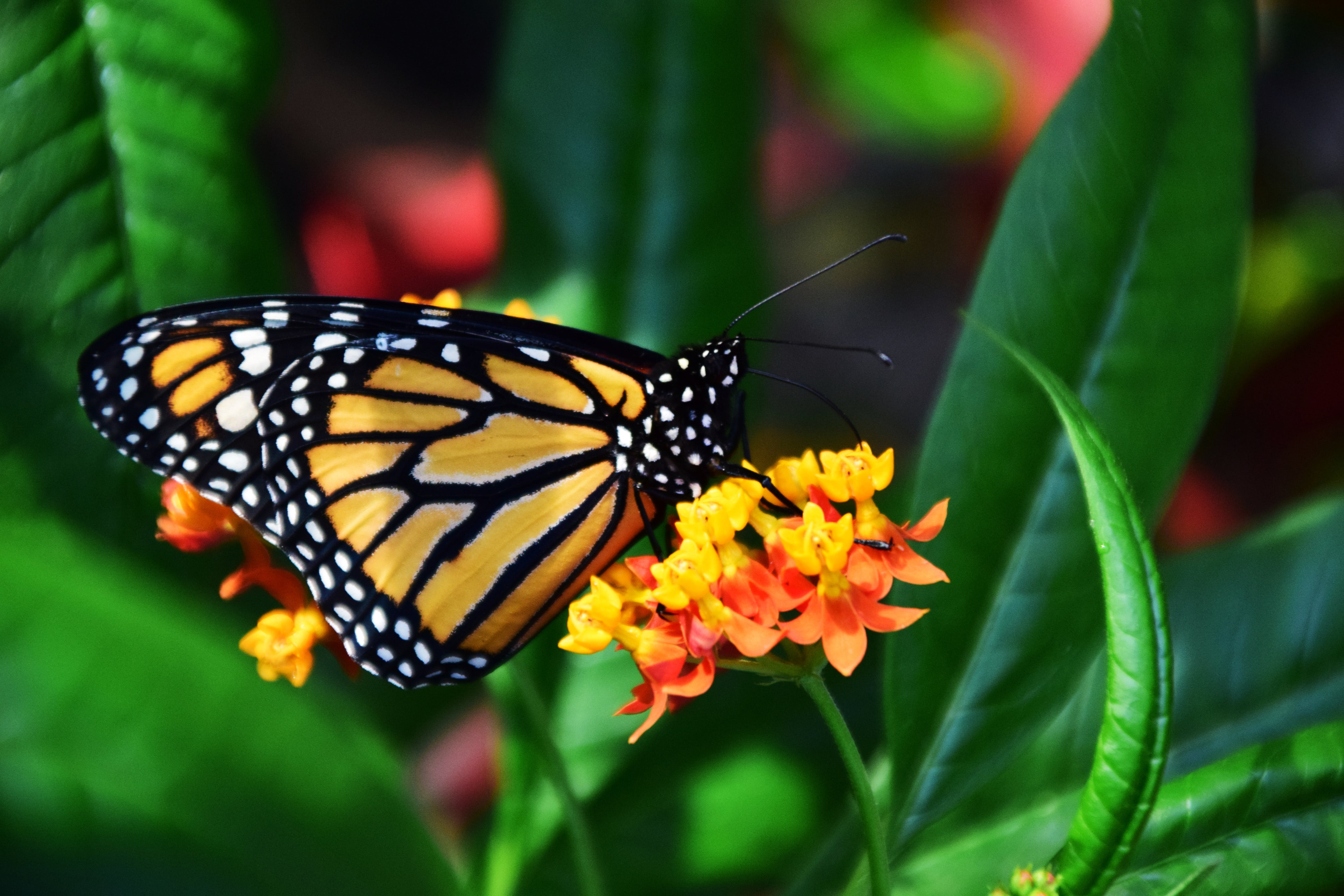 Selective Focus Photo of Black and Yellow Butterfly