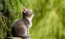 animal, cat, curious