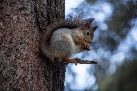 Free stock photo of nature, forest, animals, squirrel