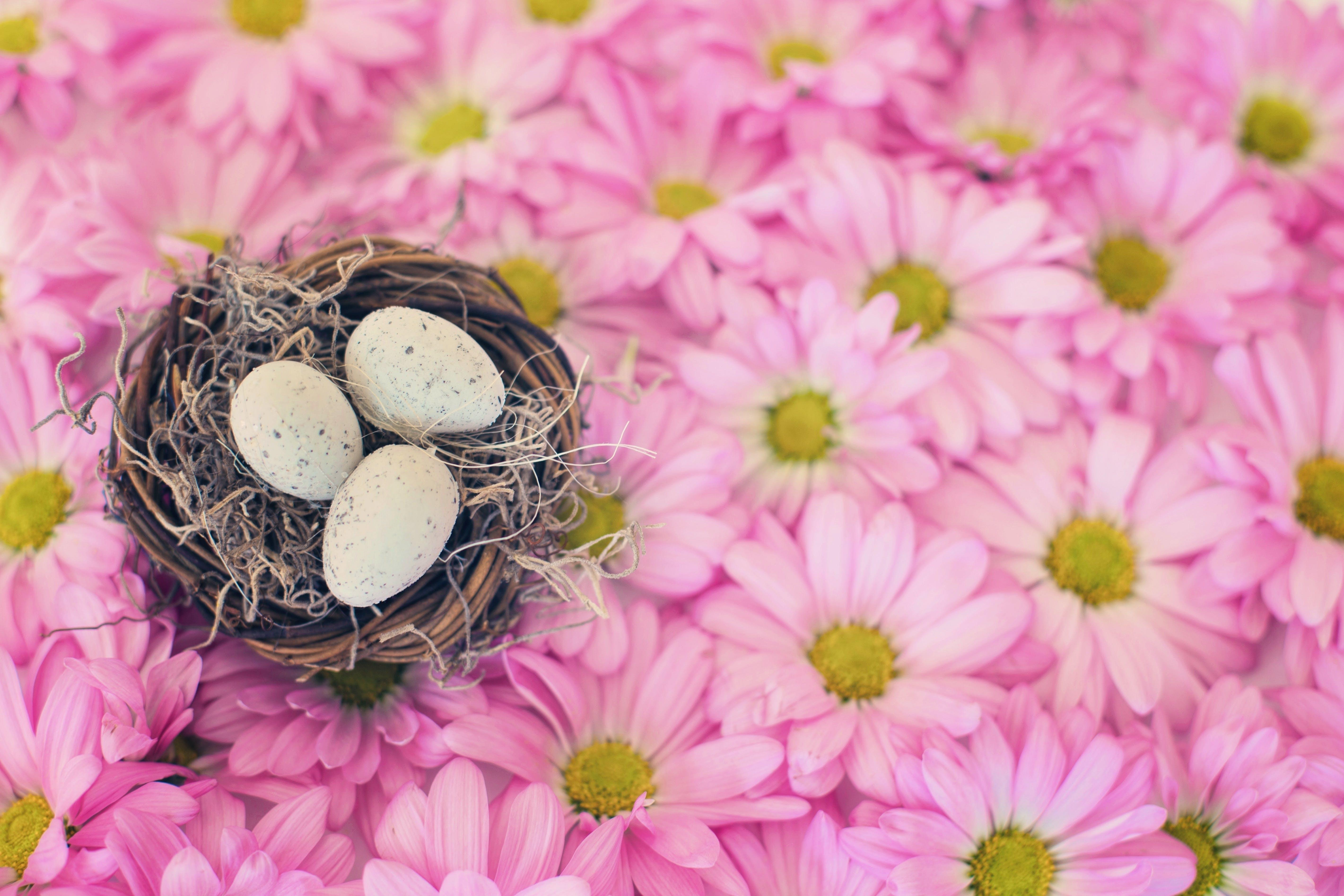 Free stock photo of nature, spring, easter, season