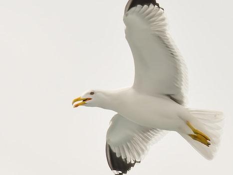 Free stock photo of flight, bird, blue, animal