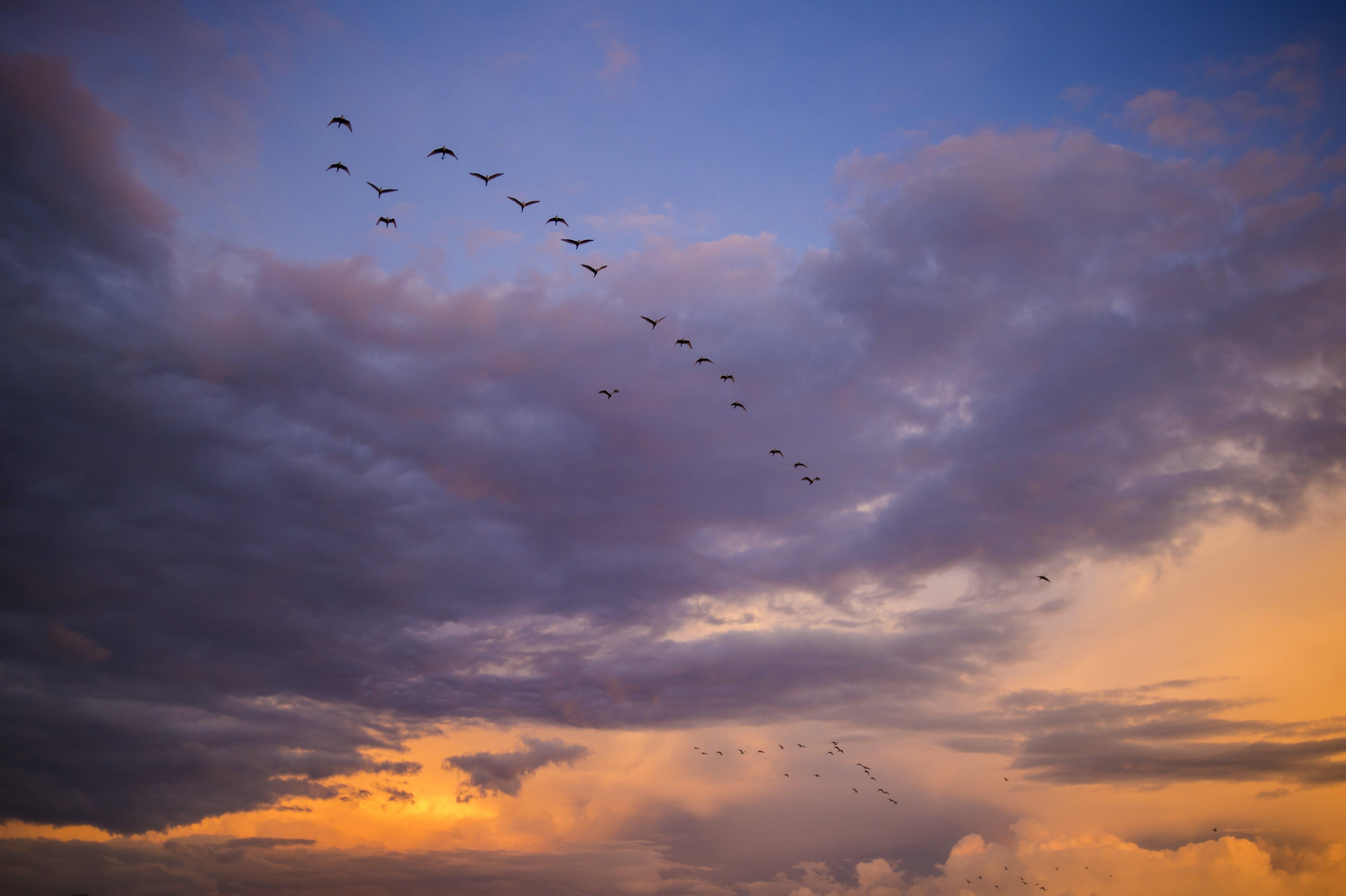 Free stock photo of sky, sunset, africa, birds