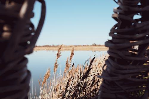 冬季, 太陽, 孔, 廠 的 免費圖庫相片