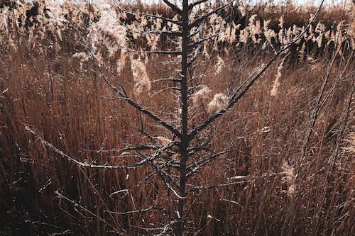 冬天的顏色, 冬季, 冬季景觀, 太陽 的 免費圖庫相片