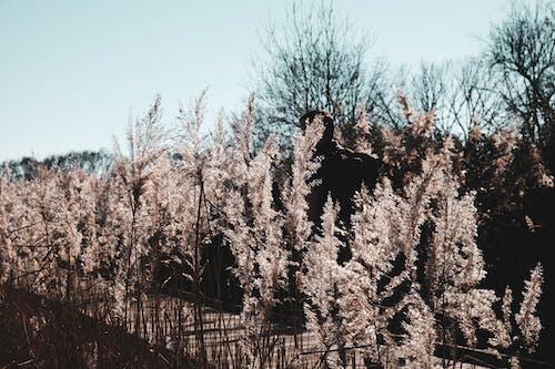 Безкоштовне стокове фото на тему «блукати, вінтажна камера, завод, зима»