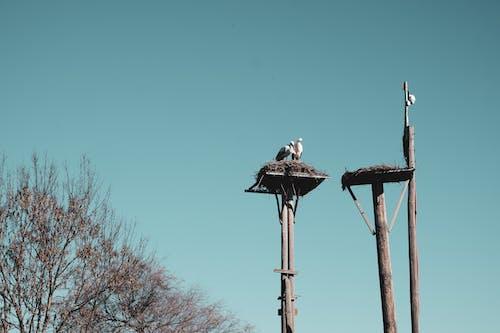 冬季, 愛, 棲息的鳥, 棲息的鳥類 的 免費圖庫相片