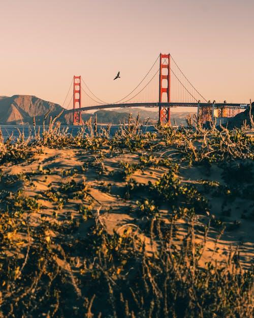 下落, 交通系統, 吊橋, 夏天 的 免费素材照片