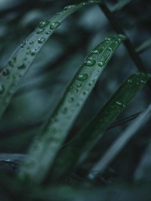 Free stock photo of abstract, after rain, after the rain, background