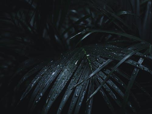 Foto d'estoc gratuïta de abstracte, cartell, d'humor variable, després de la pluja