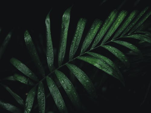 Δωρεάν στοκ φωτογραφιών με ανάπτυξη, βρεγμένος, δροσιά, δροσοσταλίδες