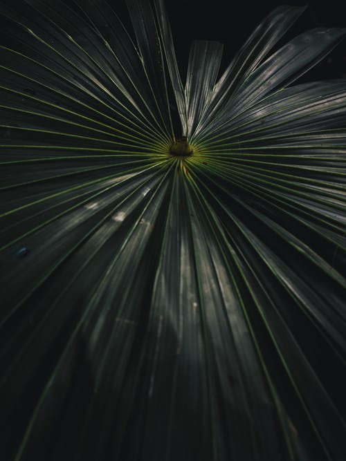Free stock photo of abstract, background, dark, dark green