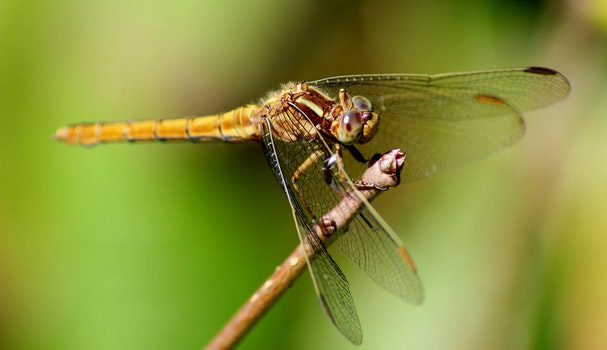 Free stock photo of blur, color, outdoors, insect