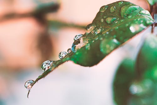 Free stock photo of dewdrop, droplets, droplets of water