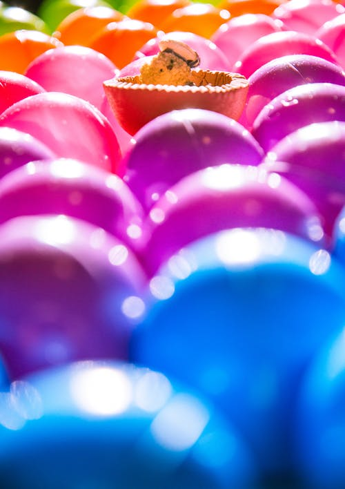 Free stock photo of balls, bear, colors