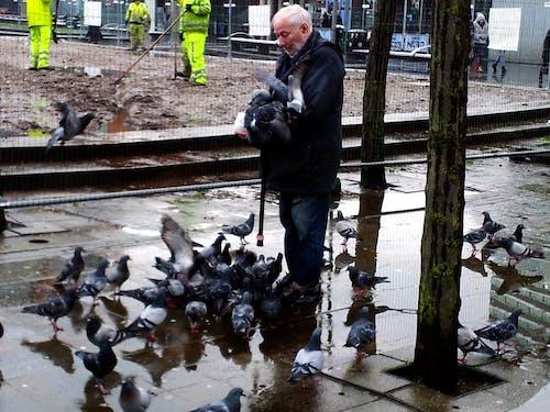 Ilmainen kuvapankkikuva tunnisteilla manchesterin kaupunkikierros hitchcock ja linnut