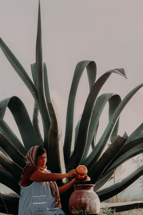 Free stock photo of advertising, agave, aguamiel, american