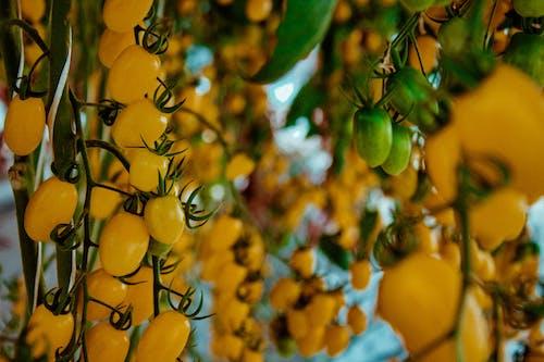 Free stock photo of abundance, agriculture, aromatic, background