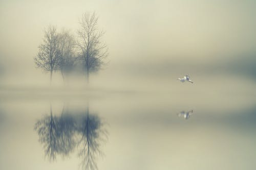 Trees Surrounded by Water during Foggy Day