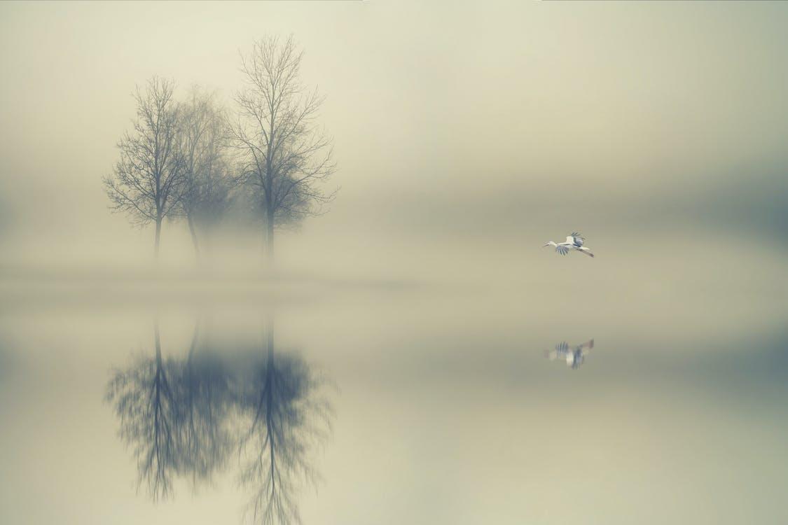 вода, деревья, длинная экспозиция