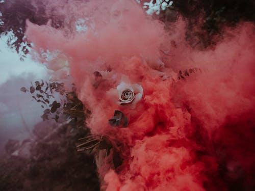 çiçek, Çiçek açmak, çiçeklenmek, duman içeren Ücretsiz stok fotoğraf