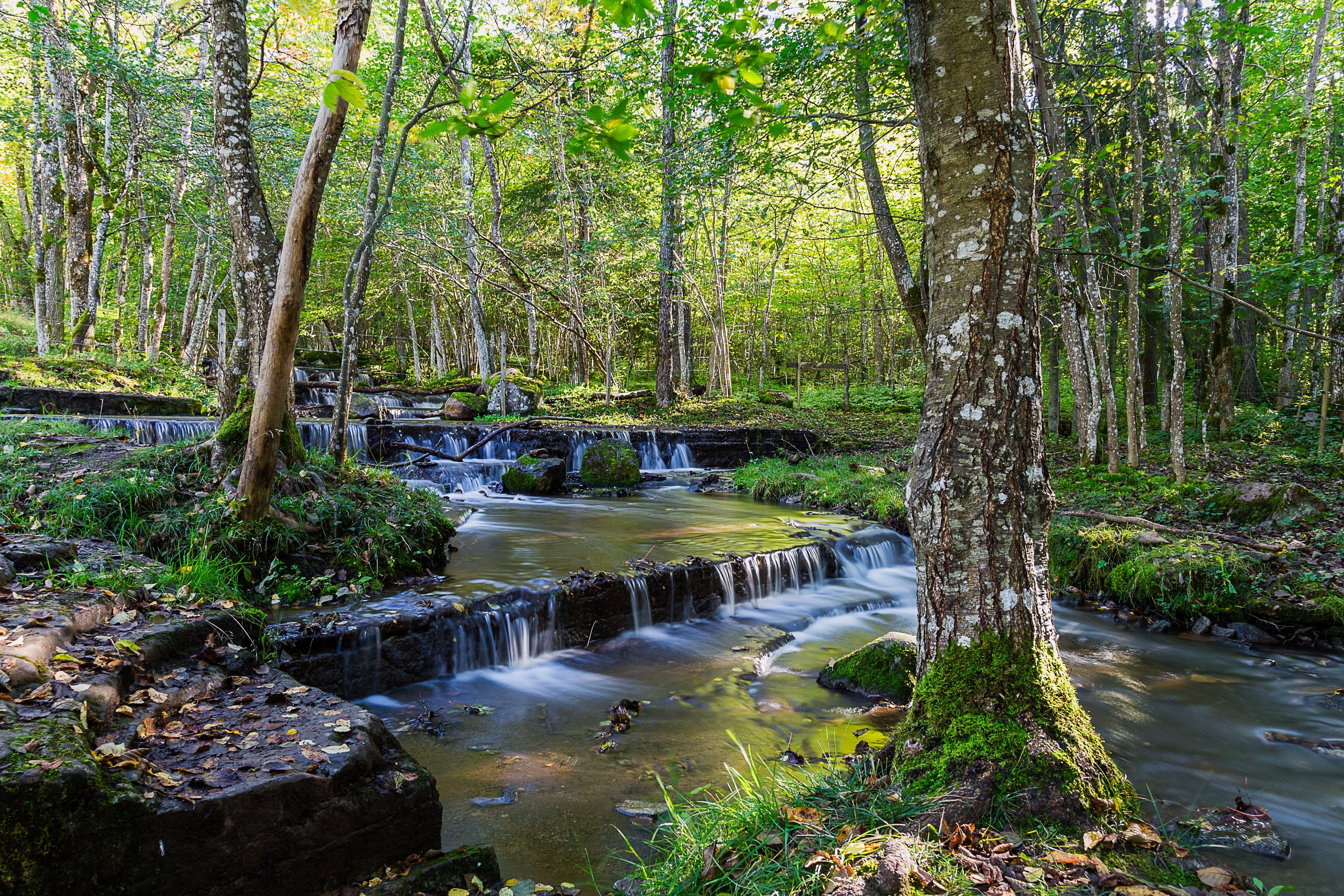 Gratis lagerfoto af natur, skov, vand, vandfald