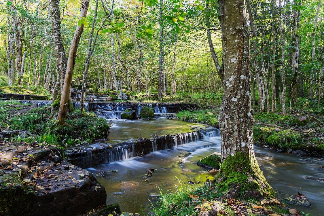 luonto, metsä, pitkä valotusaika