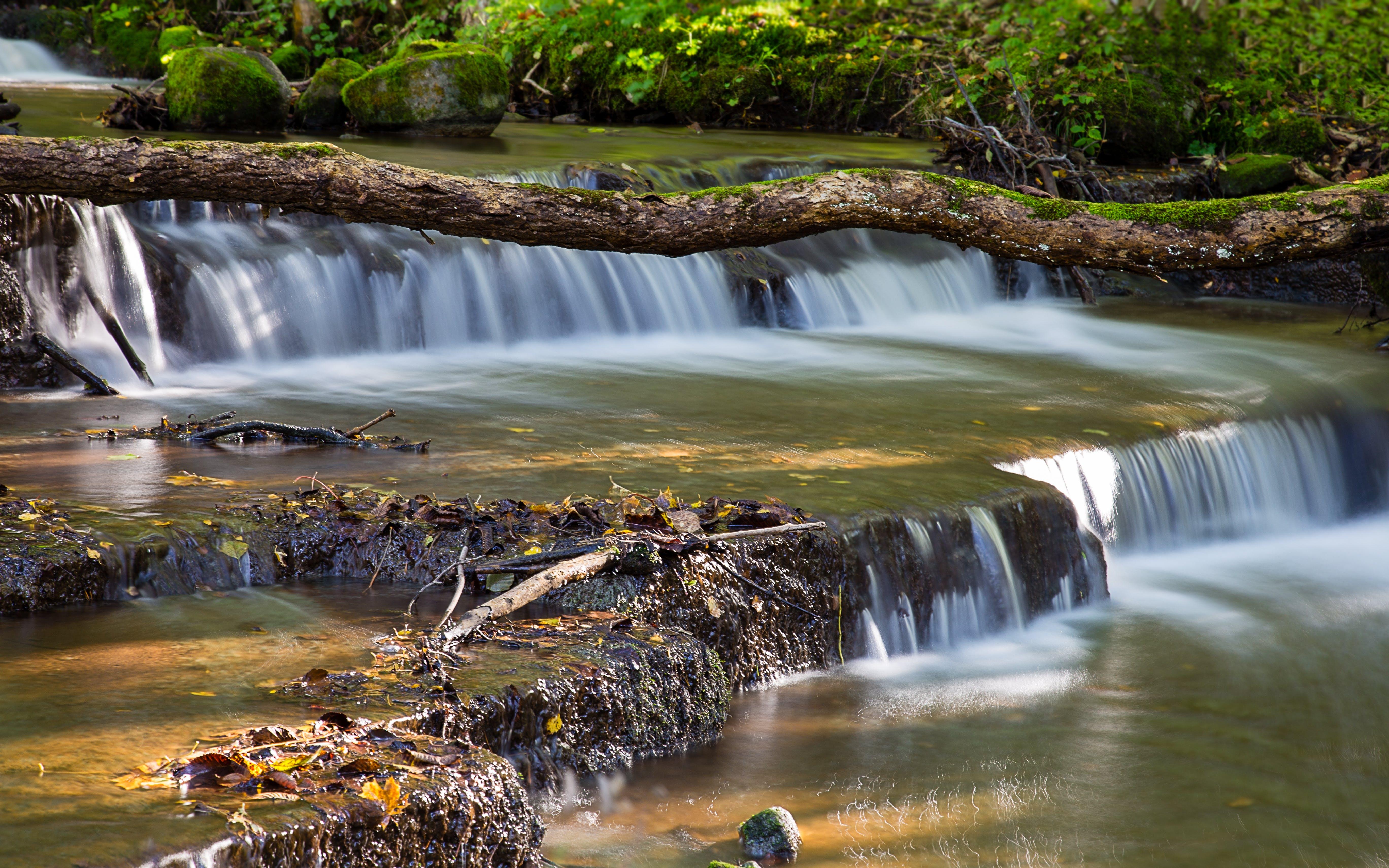 Kostenloses Stock Foto zu natur, wald, wasser, wasserfälle