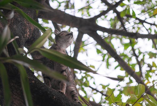 Fotobanka sbezplatnými fotkami na tému mačka, strom, zelená