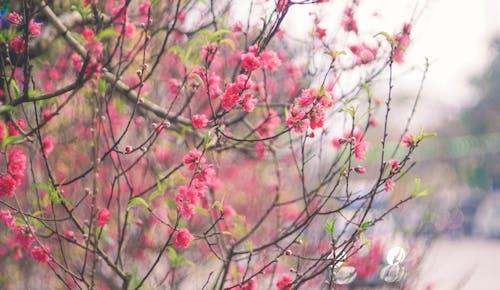 Foto d'estoc gratuïta de carrer, festiu, flor, lunar