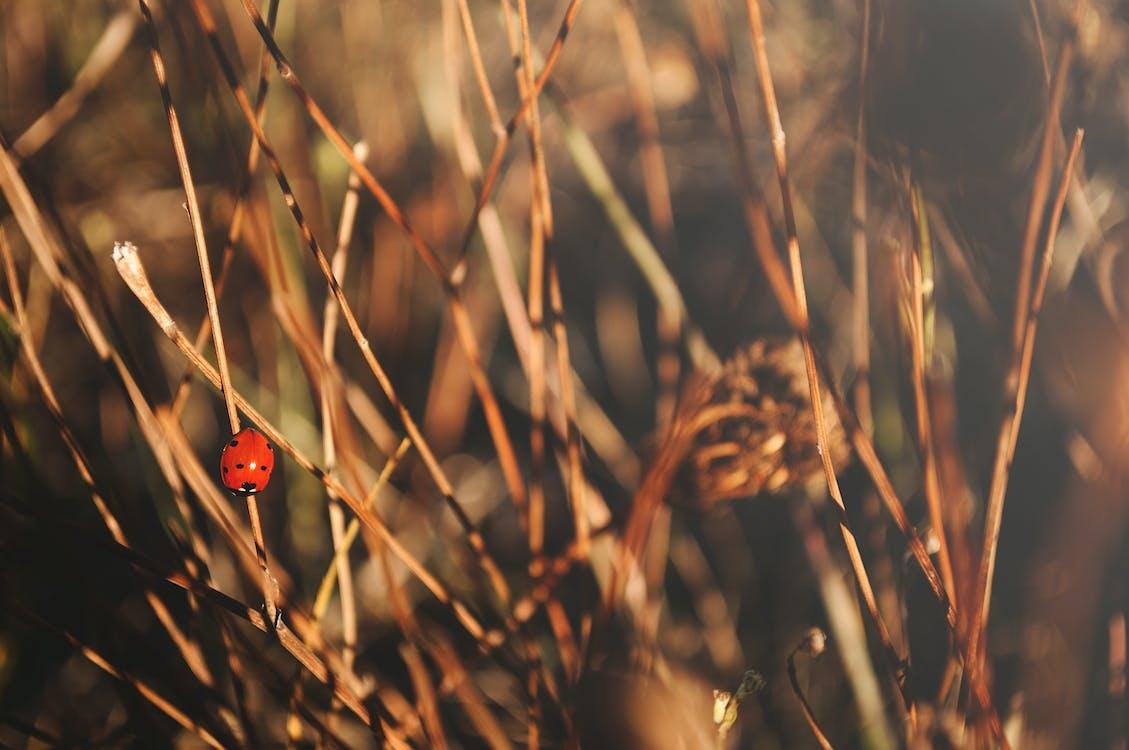 beruška, hmyz, příroda