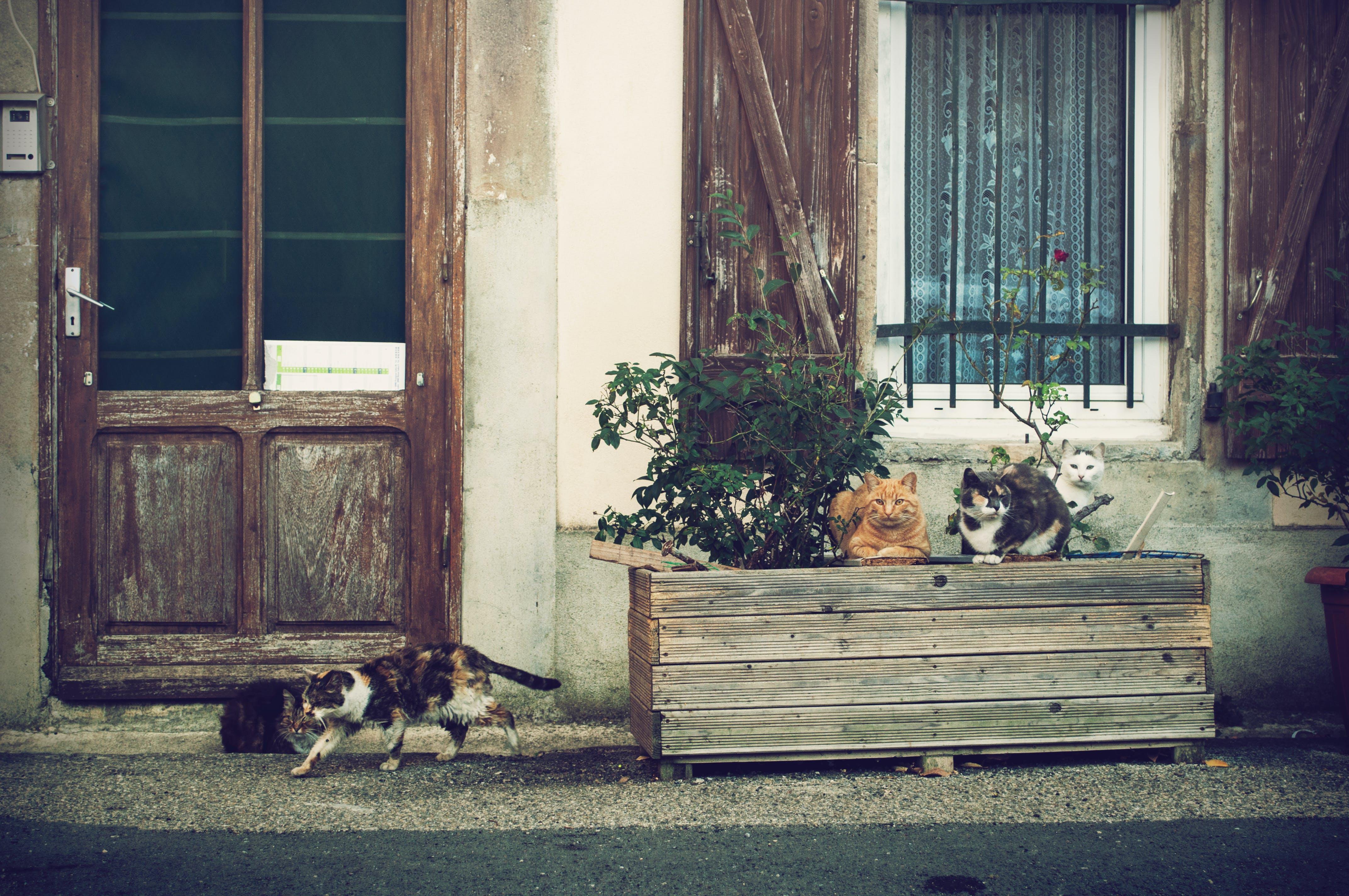 Free stock photo of animal, cats, door