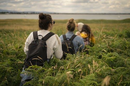 シダ, シダの葉, トレッキング, バックパックの無料の写真素材