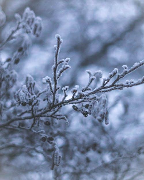 Kostenloses Stock Foto zu baum, eis, eisig, frost
