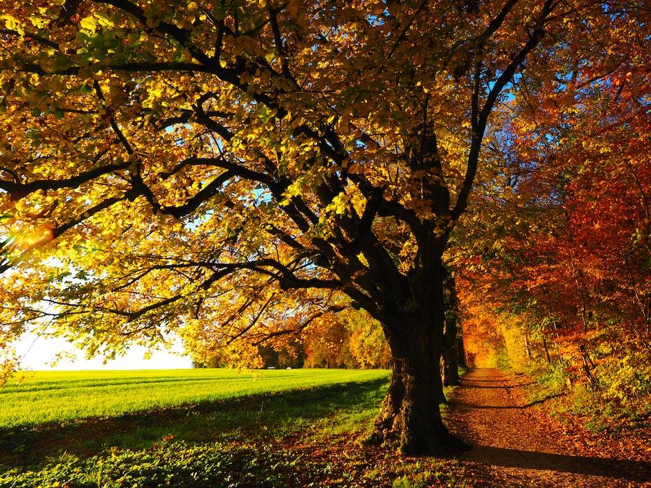 autumn, autumn mood, colorful