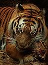 animal, eyes, big