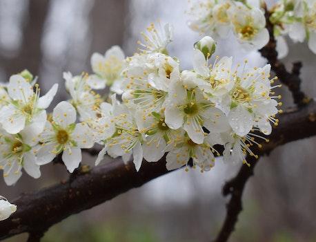 Free stock photo of nature, spring, tree, rain