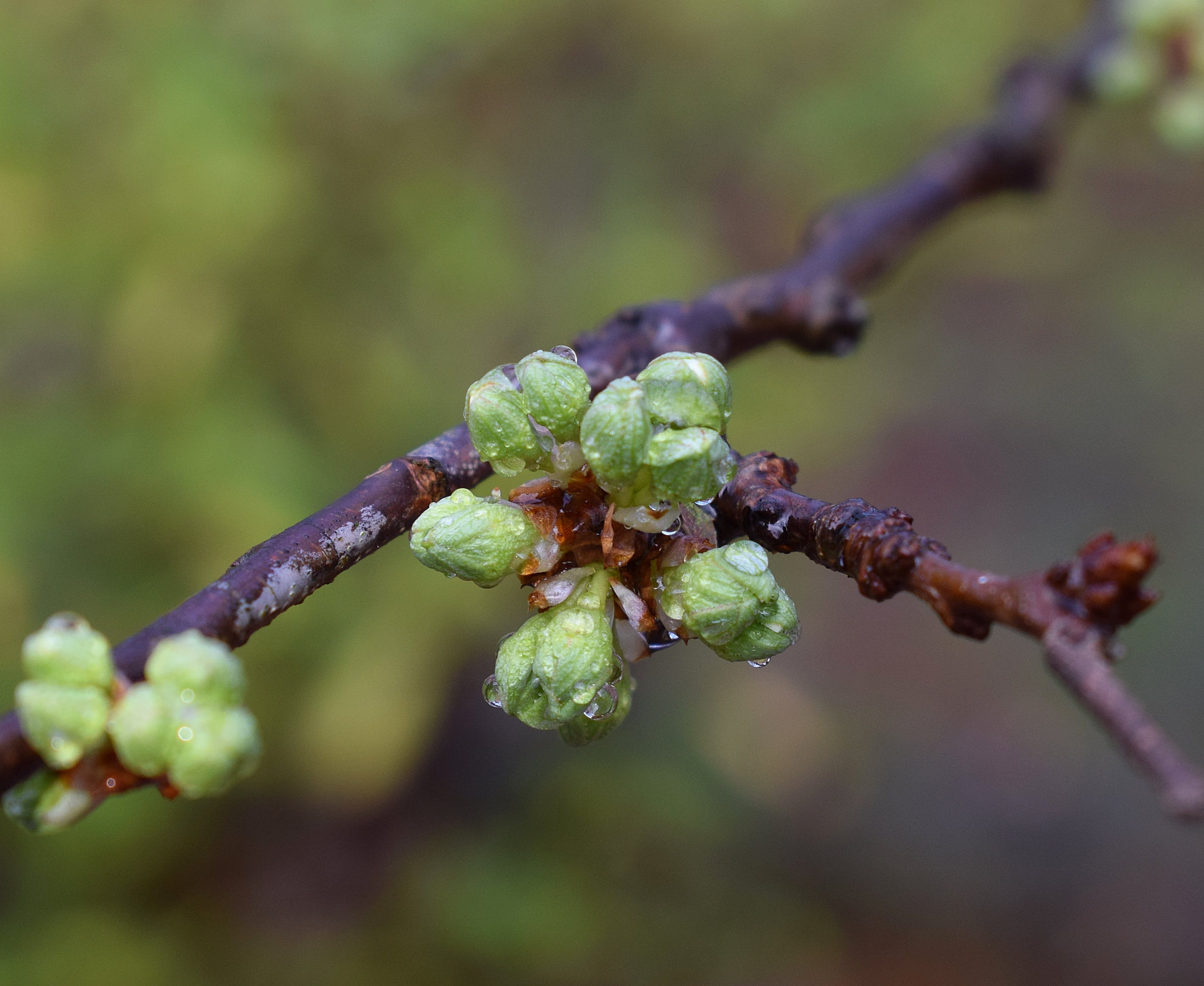 Free stock photo of nature, spring, tree, raindrops