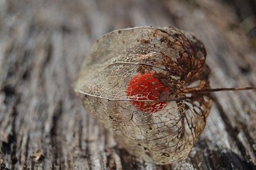 Kostnadsfri bild av bark, bo, färg, frukt