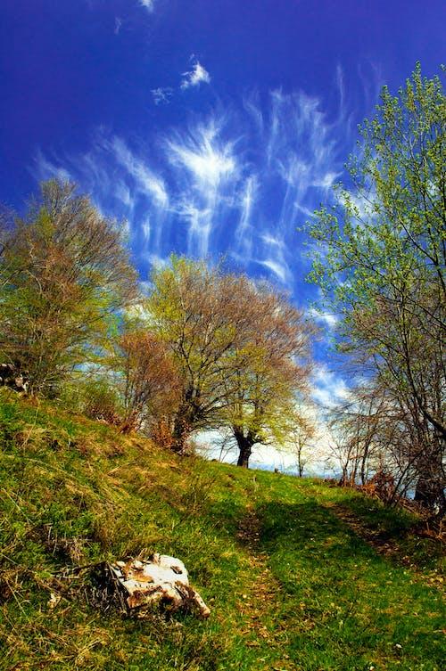 Gratis lagerfoto af bjerg, fjeder, forår, landskab