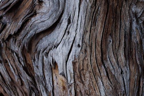 Immagine gratuita di abbaiare, corteccia, corteccia di albero, grezzo