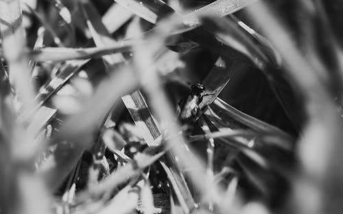マクロ, モノクローム, 昆虫, 白黒の無料の写真素材