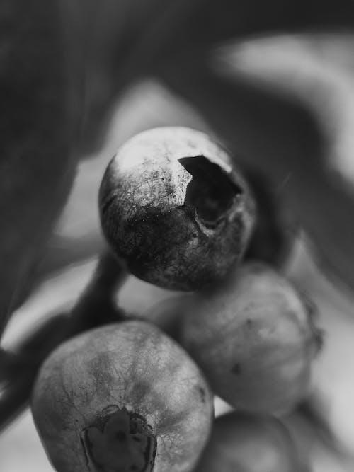 フルーツ, ブルーベリー, マクロ, 白黒の無料の写真素材