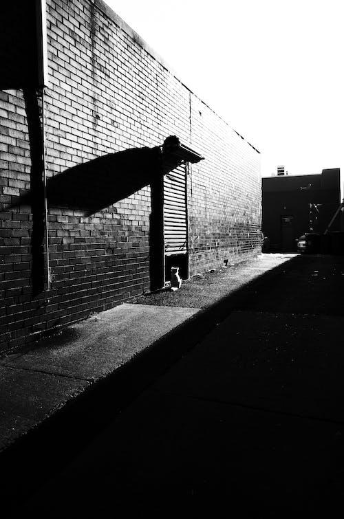 コントラスト, ネコ, 影, 明るいの無料の写真素材