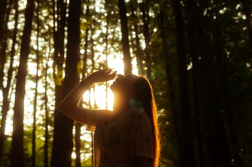Free stock photo of back light, backlight, beauty in nature, believe