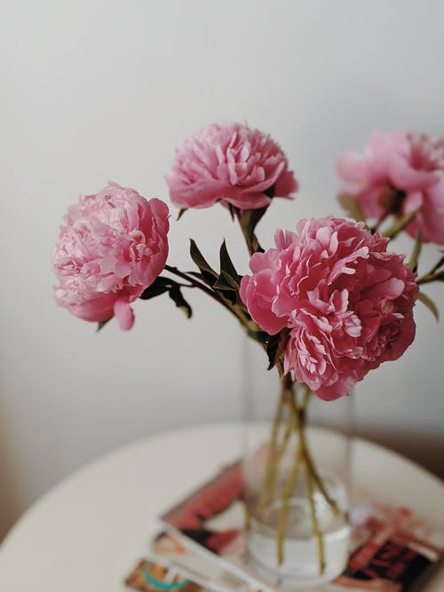 微妙, 淺焦點, 牡丹, 粉紅色的花 的 免費圖庫相片