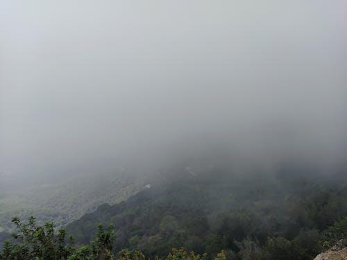 Fotos de stock gratuitas de árbol, bosque nuboso, montaña