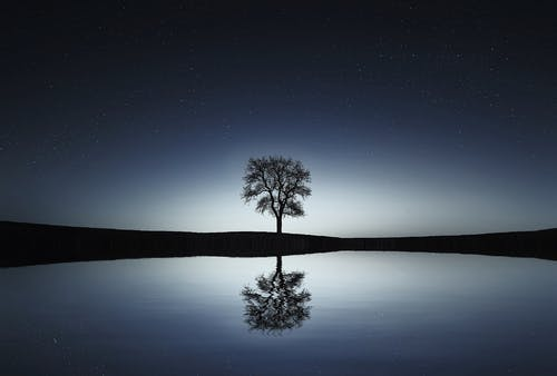 Black Tree Near Body of Water