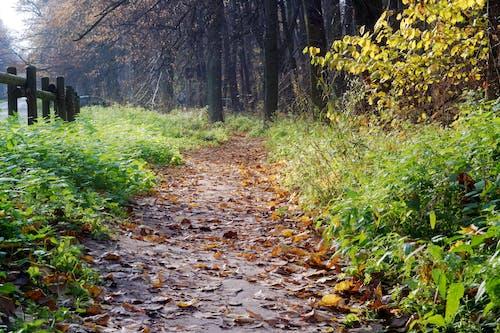 Immagine gratuita di alberi, arrugginito, autunno, colori